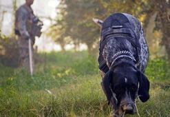 Arama köpekleri kanser teşhisinde kullanılabilir