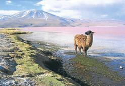 Bolivya hareketine hazır mısınız