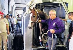 Milyon dolarlık  atlar bagajda