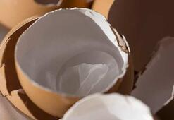 Yumurta kabuğu zarının daha öce duymadığınız faydaları