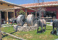 Zeytinyağı Müzesi'ni Bakan Günay açacak