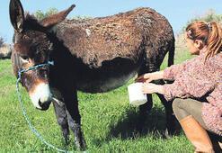 Eşek sütünün inanılmaz faydası
