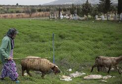 86 yaşındaki kadın sınırda çobanlık yapıyor