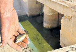 Barajın suyu kesildi balıklar ölüyor