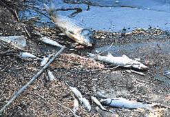 Bakırçay'da balık ölümleri raporu