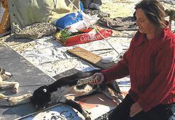 Bolluca'daki köpekler artık huzurlu, insanlar gergin