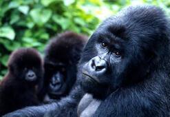 Birçok hayvan nesli tükenme tehlikesiyle karşı karşıya