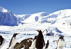 Antartika İstanbulda