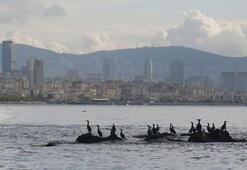İstanbulun kayıp adası gün yüzüne çıkarılıyor