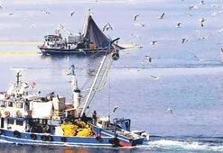 Balıktan çok balıkçı geldi