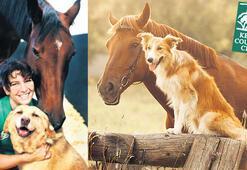 Pony ve köpek festivali