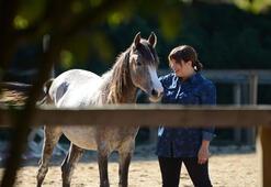 Atlarla liderlik koçluğu
