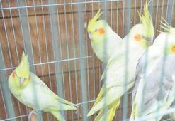 Papağan ticaretinde yasağa aldıran yok
