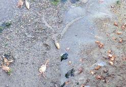 Fay hattı bölgesinde korkutan balık ve yengeç ölümleri