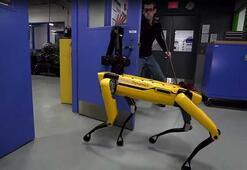 Boston Dynamicsin robot köpekleri şimdi de insan engeline karşı direniyor