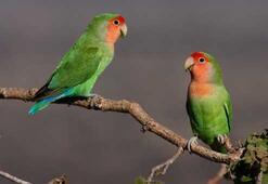 Gördüğünüz papağanları ihbar edin
