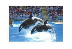 Katil balinalar 'davacı' oldu