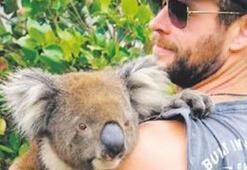 Keşke o koala ben olsaydım