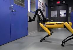 Boston Dynamicsin robot köpekleri şimdi de kapıları açabiliyor