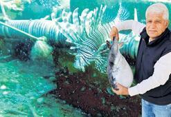 Kızıldenizden gelen 61 yabancı balık türü Akdeniz'i işgal etti