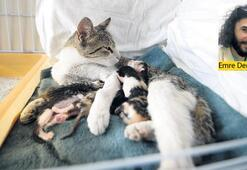 Ölümün eşiğindeki kediye 'Hayat' veren müdahale