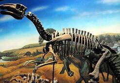 Dinozor yumurtaları kuşlardan daha geç olgunlaşıyor