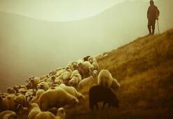 100 bin çoban açığı için Suriyeli aranıyor