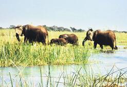 Uzak ülke Zambiya