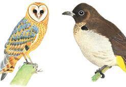 Antalya'nın ilginç park kuşları