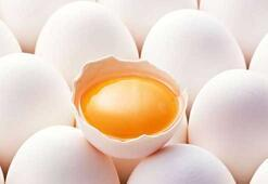 Yumurtada yeni dönem başlıyor