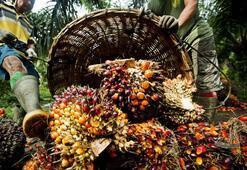 Palm yağı ne zaman zararlı