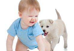 Köpekle bebek nasıl tanışmalı