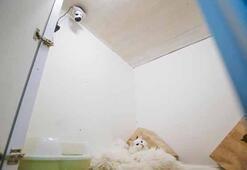 Dünyanın ilk 5 yıldızlı kedi oteli