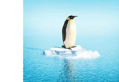 Penguenler aslında sıcak hava seviyor
