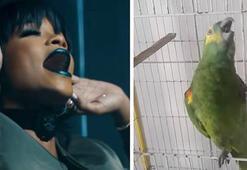 Rihannanın ses ikizi papağan