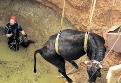 Kuyaya düşen inek 5.5 saatte kurtarıldı