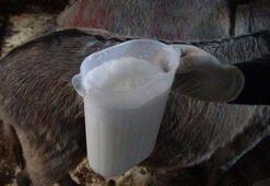 Çiftliğinde eşeklerin sütünü sağıp satıyor