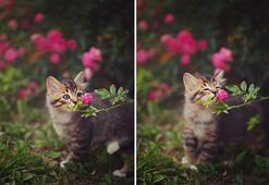 Çiçek koklayan sevimli hayvanlar