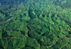 Endonezyanın Leuser Milli Parkından doğa manzaraları