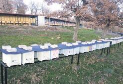 Balıkesir, belgeyle ana arı yetiştirecek