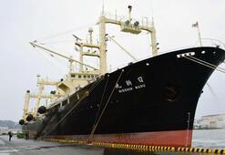 Japon filosu Antarktikada katliam yaptı