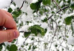 Meteorolojiden 4 il için don uyarısı