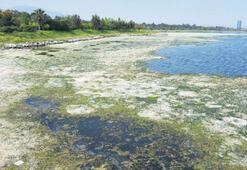 İnciraltı lagünü kurudu kuşların sayısı da azaldı