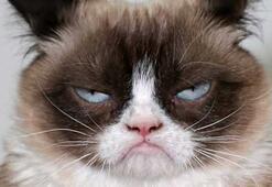 İnternet fenomeni kedi sahibine binlerce dolar kazandırdı