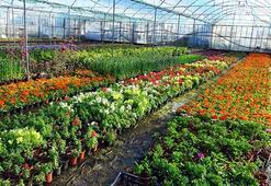 Üretilen 1.5 milyar süs bitkisi ekonomiyi renklendirdi