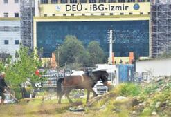Burası köy değil İzmir'in göbeği