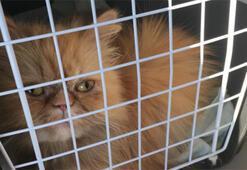 Gupse Özay kedi sahiplendi