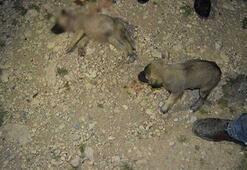 8 yavru köpek vahşice öldürüldü