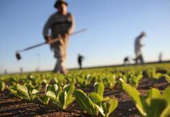 Türkiyenin organik gıda ihracatı yüzde 17 arttı