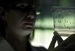 201 Zika virüsü vakası